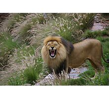 See me roar Photographic Print