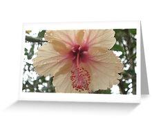 Peach Hibiscus Greeting Card