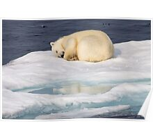 Polar Bear Reflection Poster