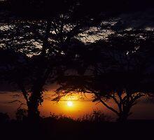 Zambezi Sunset by bertspix