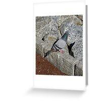 Pigeon Toe Greeting Card