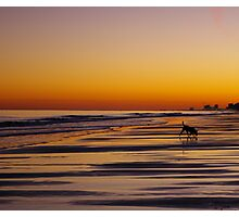 Beach Hound Photographic Print
