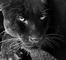 Obsidian - Black Leopard by Lisa G. Putman
