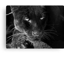 Obsidian - Black Leopard Canvas Print
