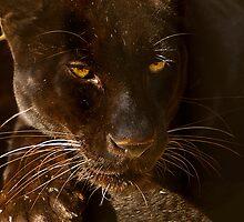 Obsidian Silk - Black Leopard by Lisa G. Putman
