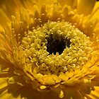 Sunshine by Gayle Shaw