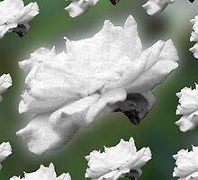 Flower Power by Rebekah  McLeod