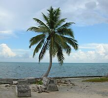 Lone Palm Tree by Paul Lenharr II
