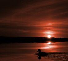 Sunset Duck (Monochrome #1) by BluAlien