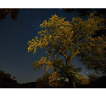 Live Oak & Starry Night Photographic Print