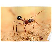 Bulldog Ant Poster