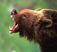 Bear Teeth by Phillip  McCordall