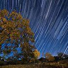 Startrails over Live Oak by A.M. Ruttle