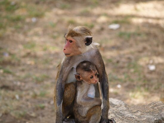 Monkey and baby by Jonathan Dower