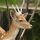 Bambi by vette