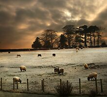 Frosty morning in the Lake District by David Robinson