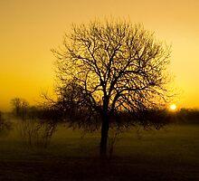 New Dawn by GlennRoger