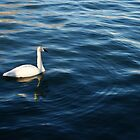 Swan Lake by pange