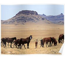 Valley of the Mustangs Poster
