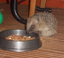 Henry The Hedghog by Mike Davitt