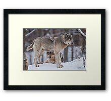 Site Seeing Framed Print