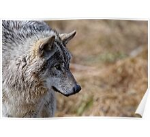 Challange Avatar 2, Timber Wolf Poster