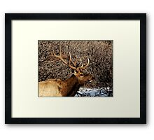 Bull Elk - Watercolor Framed Print