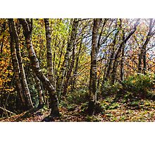 Autumn Forest Photographic Print