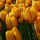 Flowers by Tim Yuan
