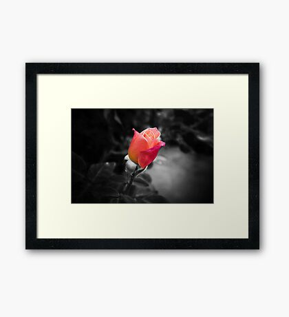 Rose To The Occasion Framed Print