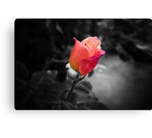Rose To The Occasion Canvas Print