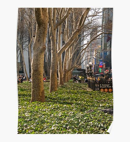 Bryant Park Trees Poster