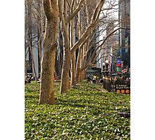 Bryant Park Trees Photographic Print