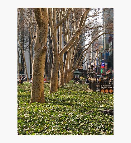 Bryant Park Trees Photographic Print