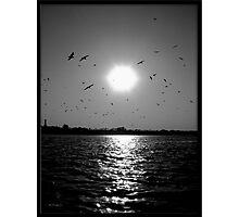 Birds on the river Ganga Photographic Print