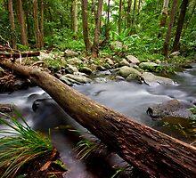 Cedar Creek by Sam Hegarty