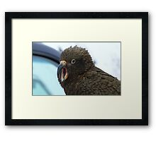 Open Wide say Ahh!!! Kea - The Remarkable's  - Queenstown - New Zealand  Framed Print