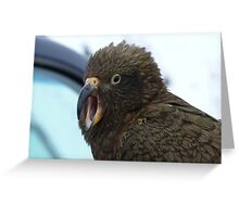 Open Wide say Ahh!!! Kea - The Remarkable's  - Queenstown - New Zealand  Greeting Card
