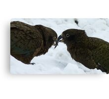 Sharing a bit of snow - Kea - Queenstown - New Zealand Canvas Print
