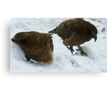 Come on Bob, this is fun! - Kea - Queenstown - New Zealand Canvas Print