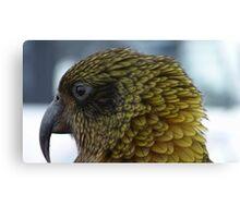 Proflie of a Kea! - Remarkables - Queenstown - New Zealand Canvas Print