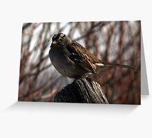 White-Crowned Sparrow - Logan, Utah Greeting Card