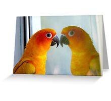 Hey good looking! - Sun Conure - New Zealand ** Greeting Card