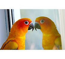 Hey good looking! - Sun Conure - New Zealand ** Photographic Print