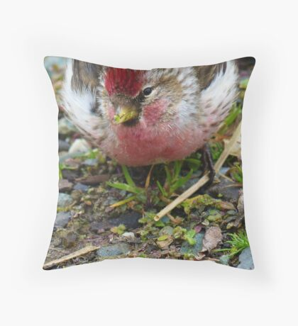 Realy Tasty - Redpoll - Southland - New Zealand Throw Pillow