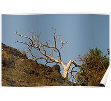 Bare white tree, bathed in morning sunlight Poster