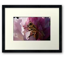 Simply Bee! - NZ - Southland Framed Print