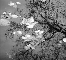 Paper Leaves in grey by JMacsRUs