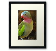 Do you like my Pastel Outfit! - Princess Parrot - NZ - Southland Framed Print