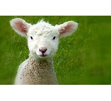Mmm Whats that Mum!!! - Lamb - NZ - Southland Photographic Print